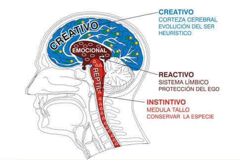 Fuente http://educar-en-arcoiris.blogspot.com/2011/09/un-poco-sobre-el-cerebro-triuno-e.html