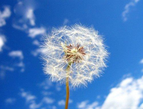 ¿Cómo Mejorar tus Ventas con el Mindfulness?